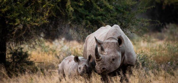 Ongava Private Game Reserve