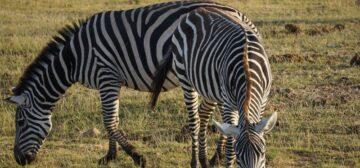 South Africa, Namibia and Botswana Tour