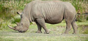 Solio Game Reserve
