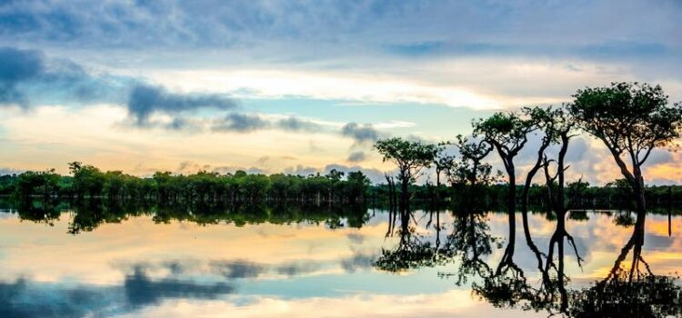 State of Amazonas
