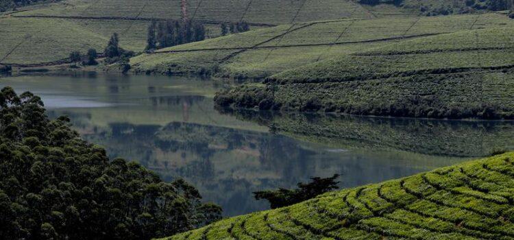 Bvumba Mountains